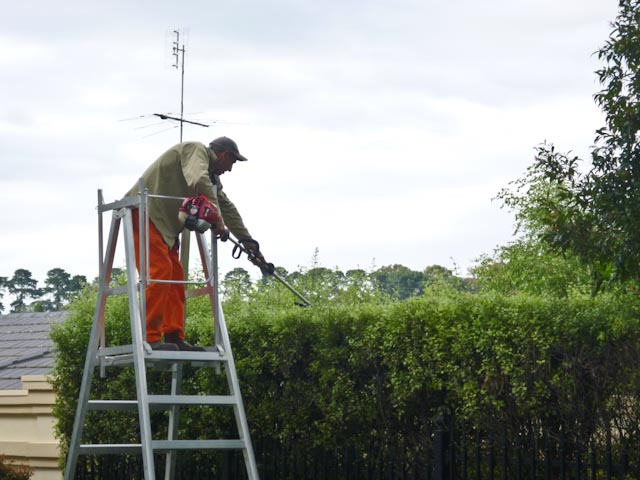 Professional, Local & Reliable Gardening Services